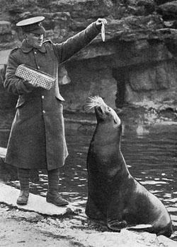 Zoo seal