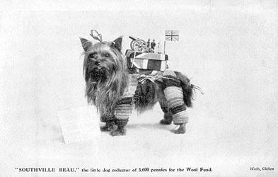 Dog yorkie ww1