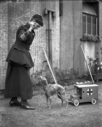 Dog greyhound pulling red cross