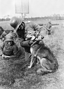 Dogs WW1 German dogs