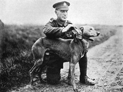 Dogs WW1 dog receiving message