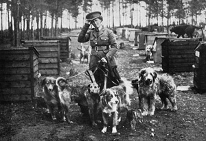 Dogs WW1 Mrs Richardson