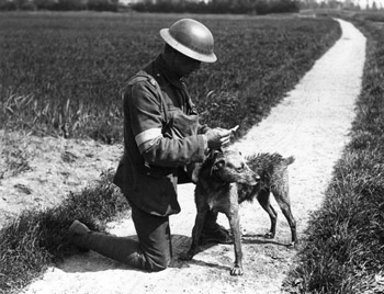 Dogs WW1 arriving wet with message