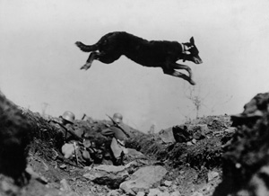 Dogs WW1 dog delivering message back