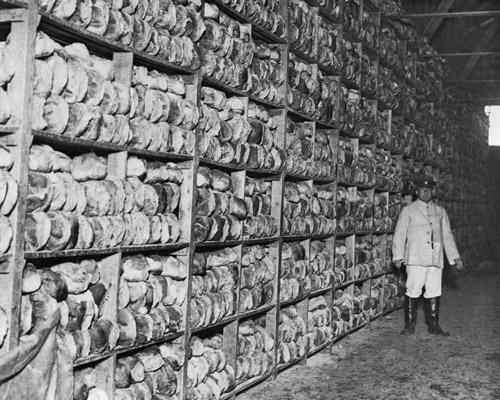 Bread blog 8