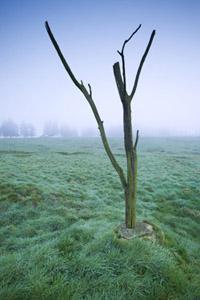 Trees 15 copy